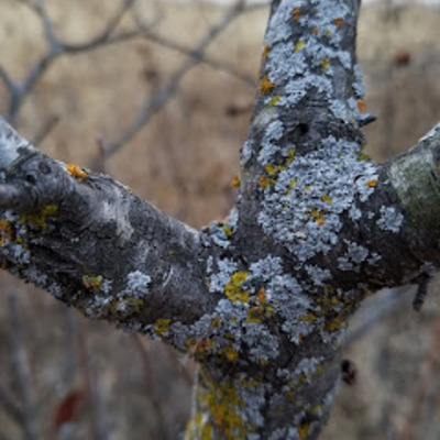 At least three kinds of Lichen